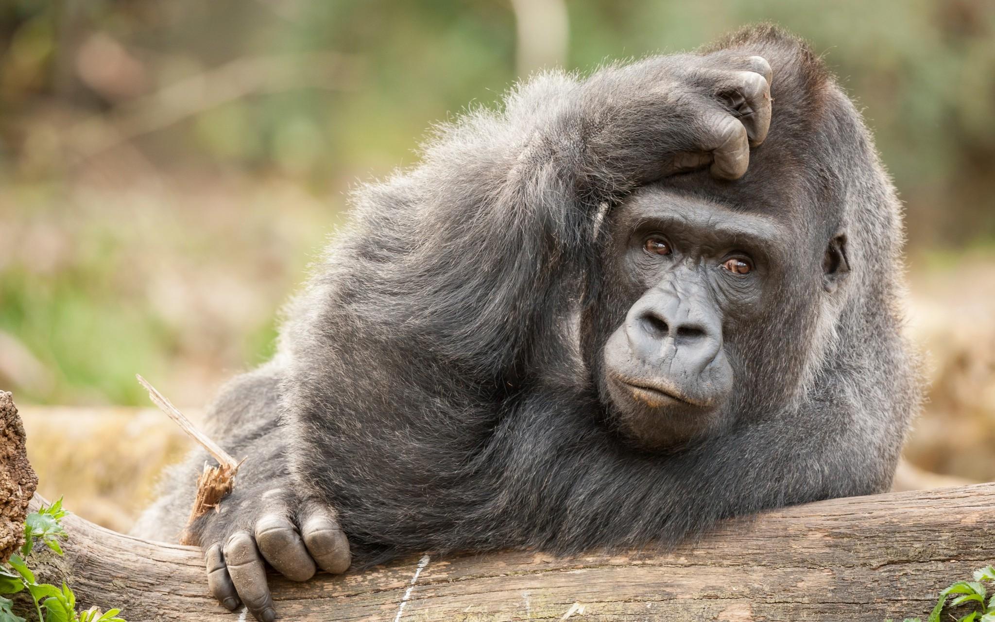 обезьяна задумалась