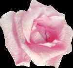 bee_floral_el18.png