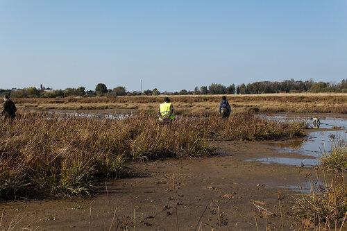 Испытания по болотной дичи 26.09.2014 года 0_b2ac7_1e25bdfd_L
