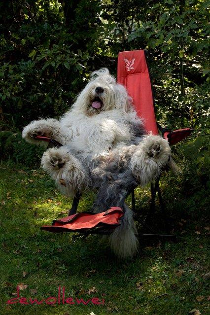 Смешные собачьи гримасы