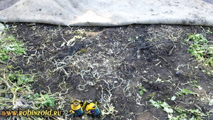 сорняк под ковром