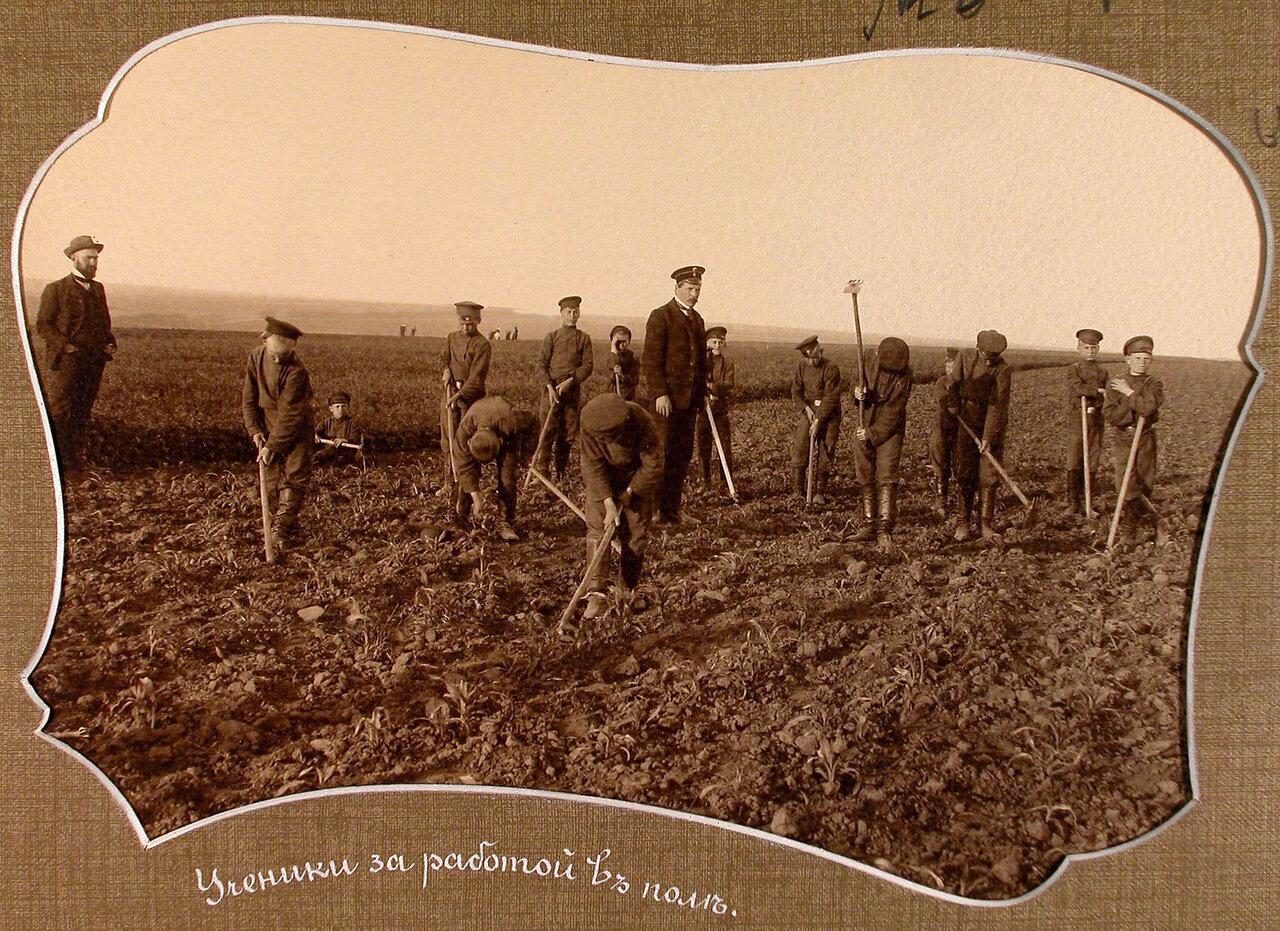 Ученики за работой в поле