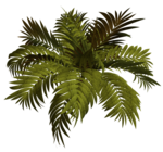 R11 - Garden Plant 2014 - 120.png