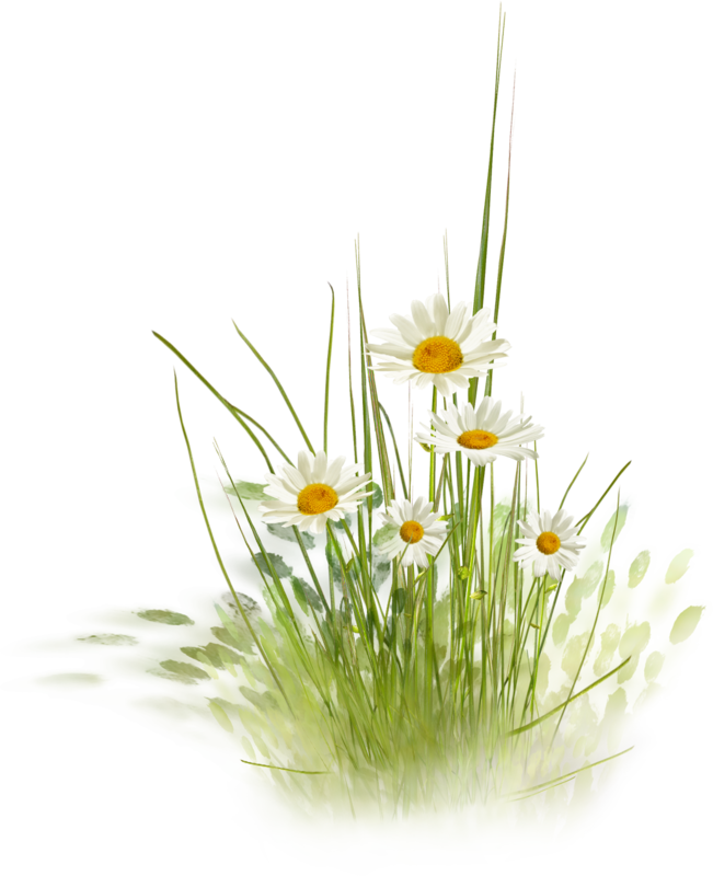 NLD Daisies (2).png