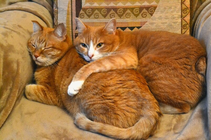 Не будите спящего котика...