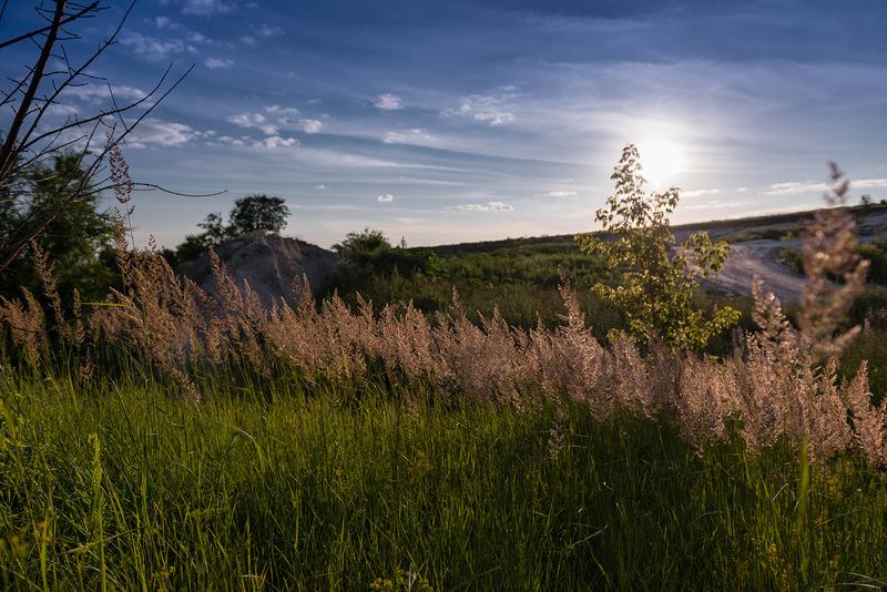 фотография, природа, бекарюковский бор, шебекинский район, белгородская область