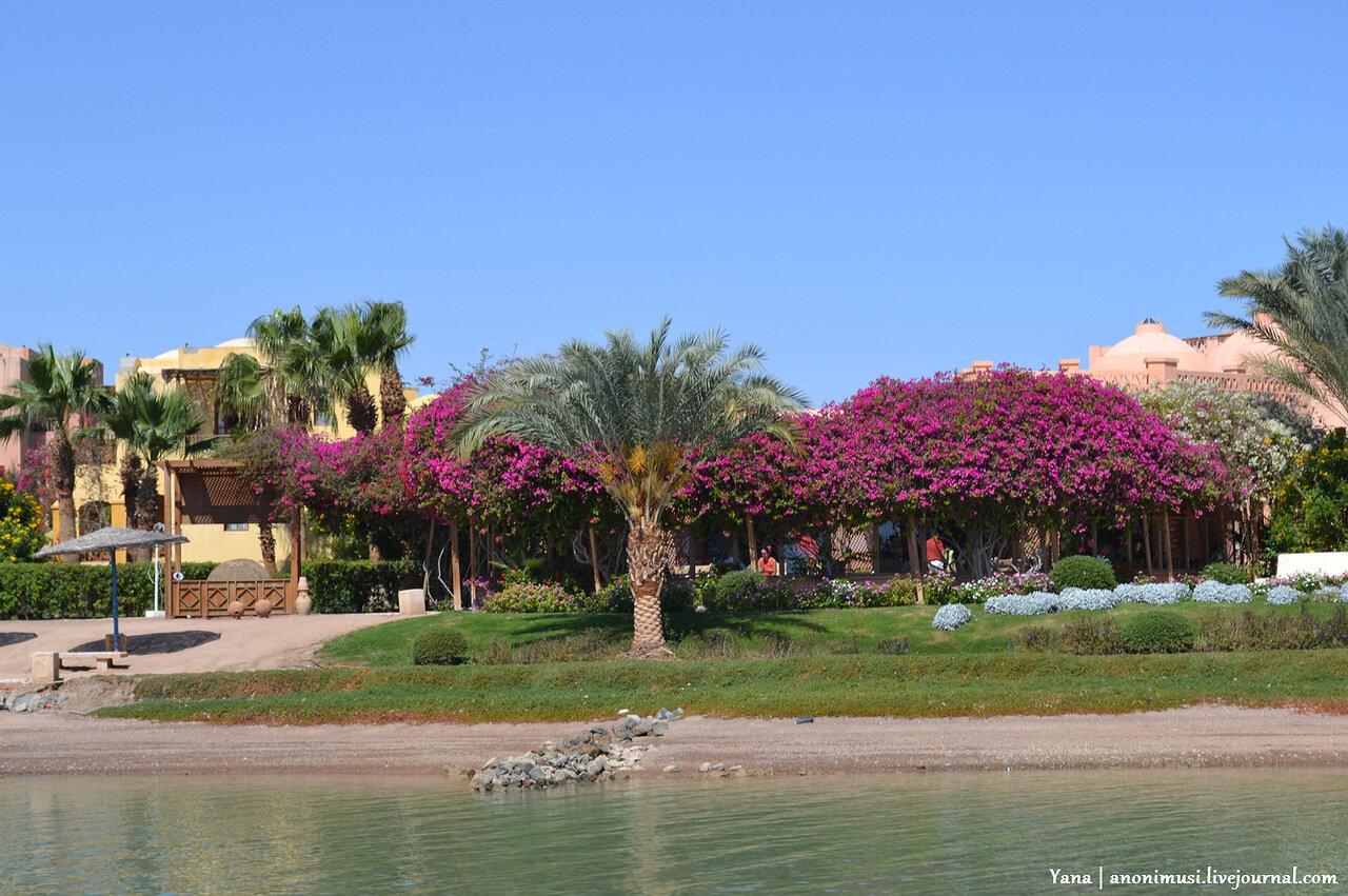 Эль-Гуна. Египет. Африка.