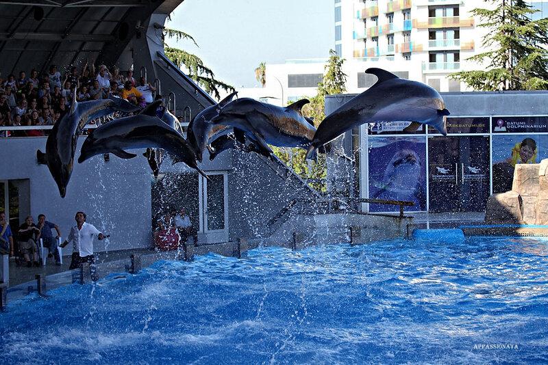 сколько стоит вход в дельфинарий в батуми термобелье для