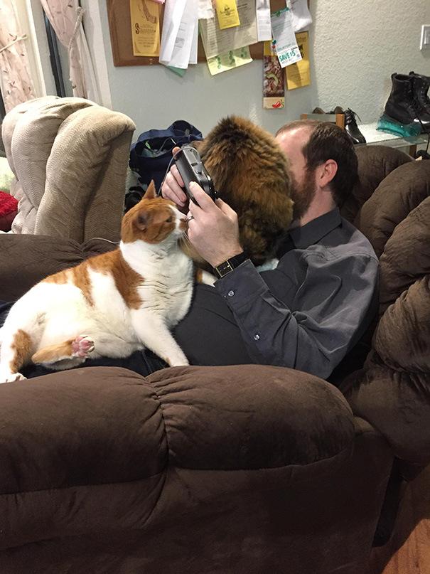 Кошки которым нет дела до ваc