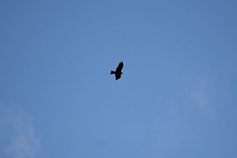 Силуэт хищной птицы в небе над индустриальной зоной Кирово-чепецкого зимзавода