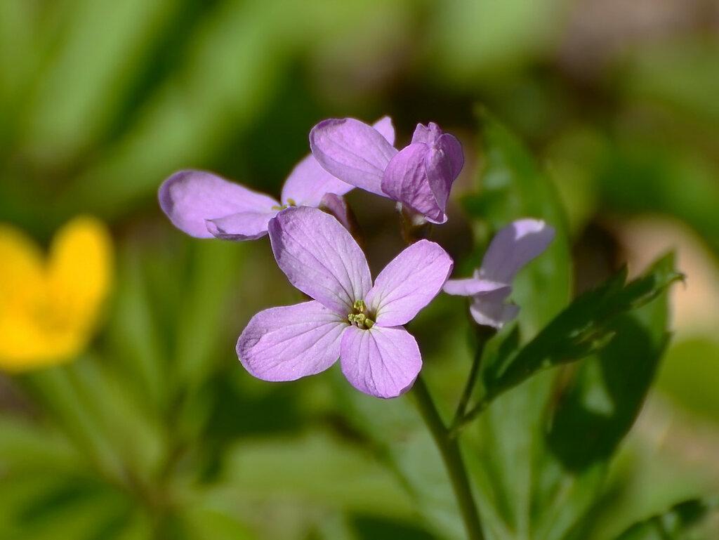 Лесные цветочки