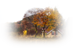 117036221_large_autumn364144_640.png