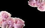 Rose,Rose.png