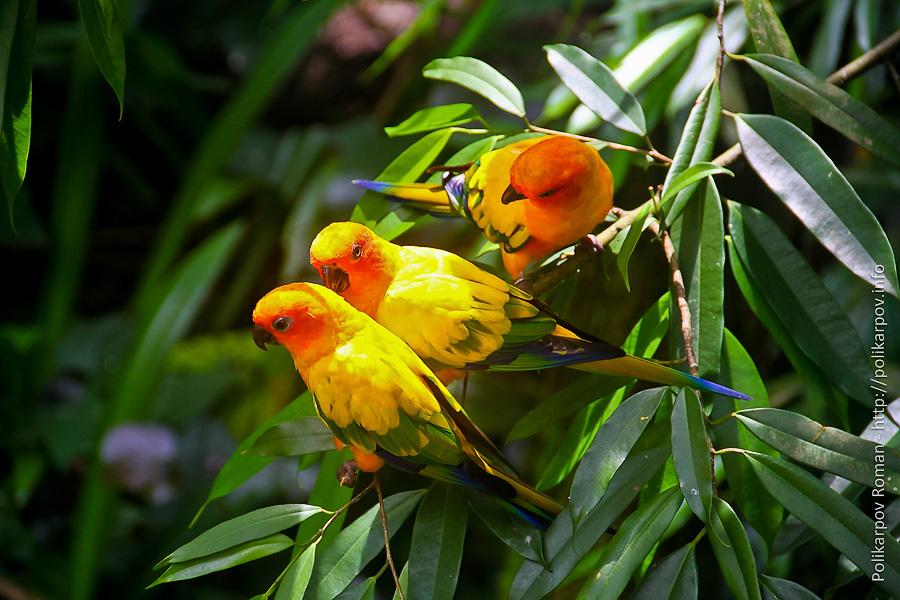 0 c4fc9 567a2eee orig Парк птиц Jurong в Сингапуре