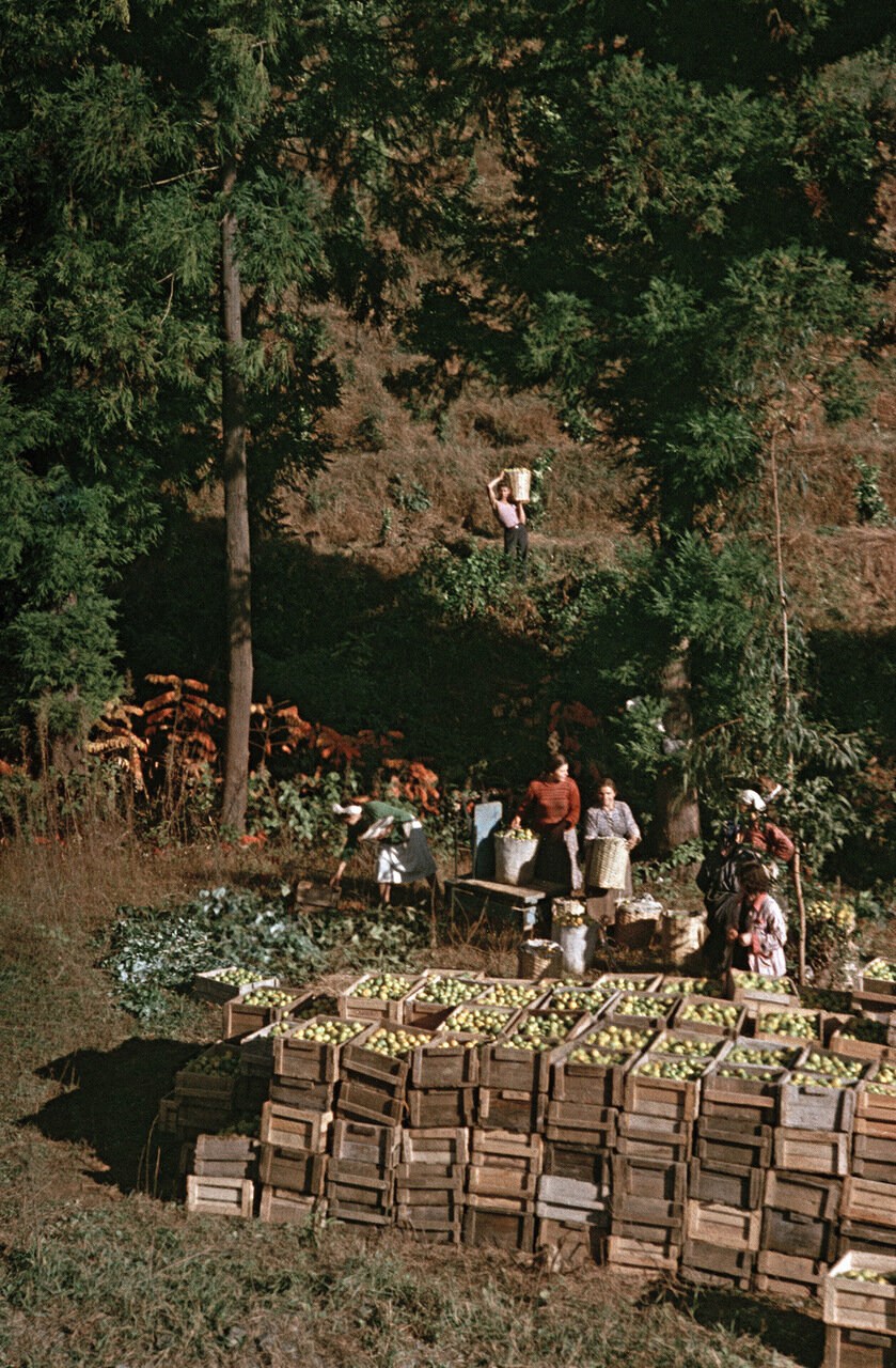 На плантациях цитрусовых