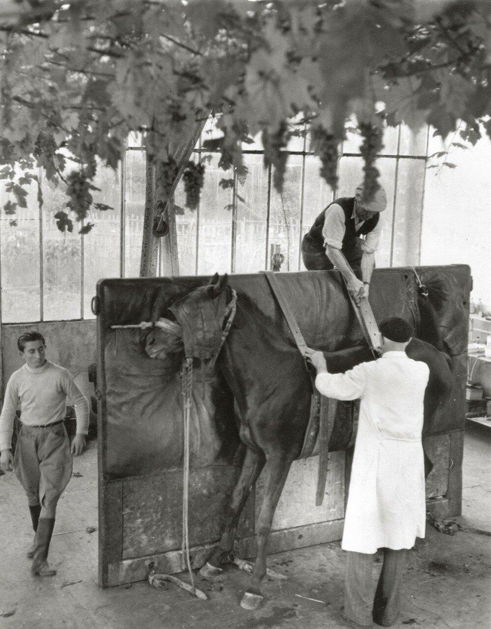 1954. Доктор Спитц, ветеринар