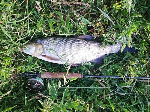 Как поймать рыбу. - Страница 2 0_122885_3b31c7ef_L