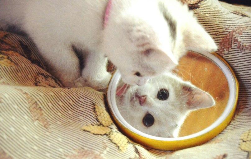 кошка-30.jpg