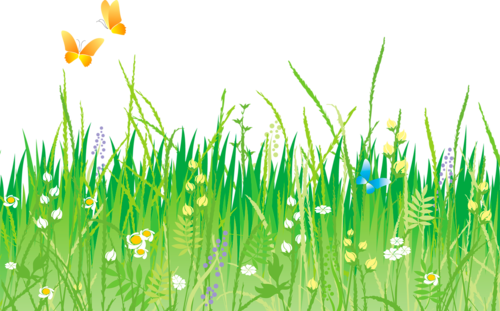 Лужайки с ромашками