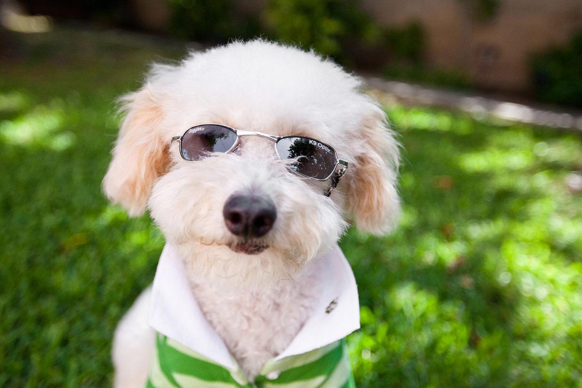 Забавные картинки собаки