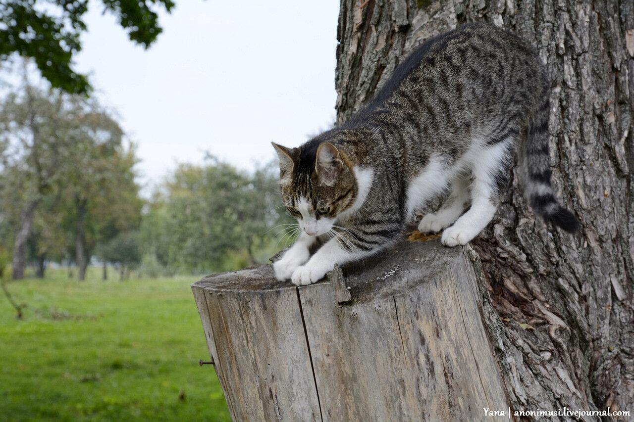 Кошка на Любенском озере