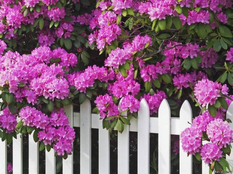 работы в саду и огороде в июле