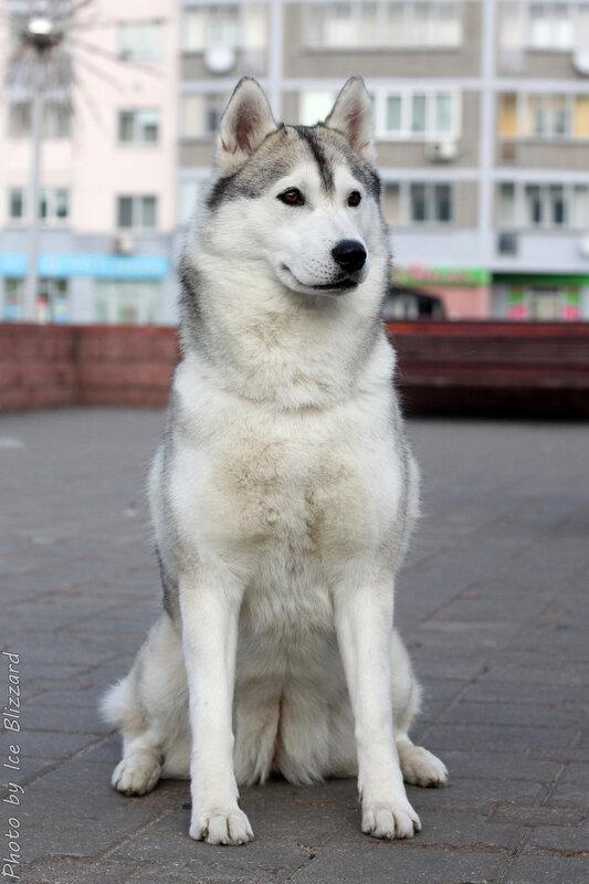 http://img-fotki.yandex.ru/get/6810/27498860.2d1/0_104ee3_889d87a5_XL.jpg