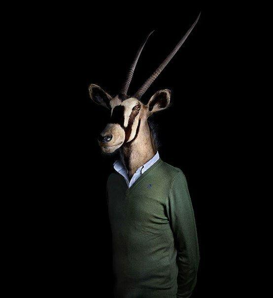 животные-модели3.jpg