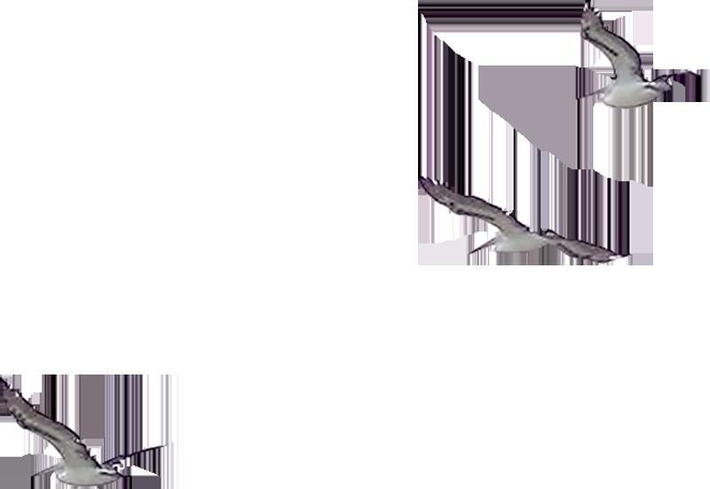 Открытка, чайка картинки анимация