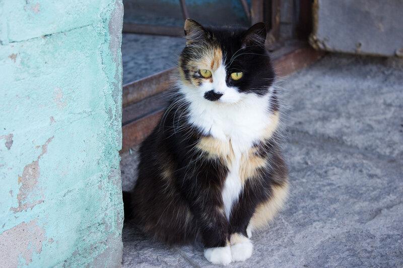 гирвасский котэ