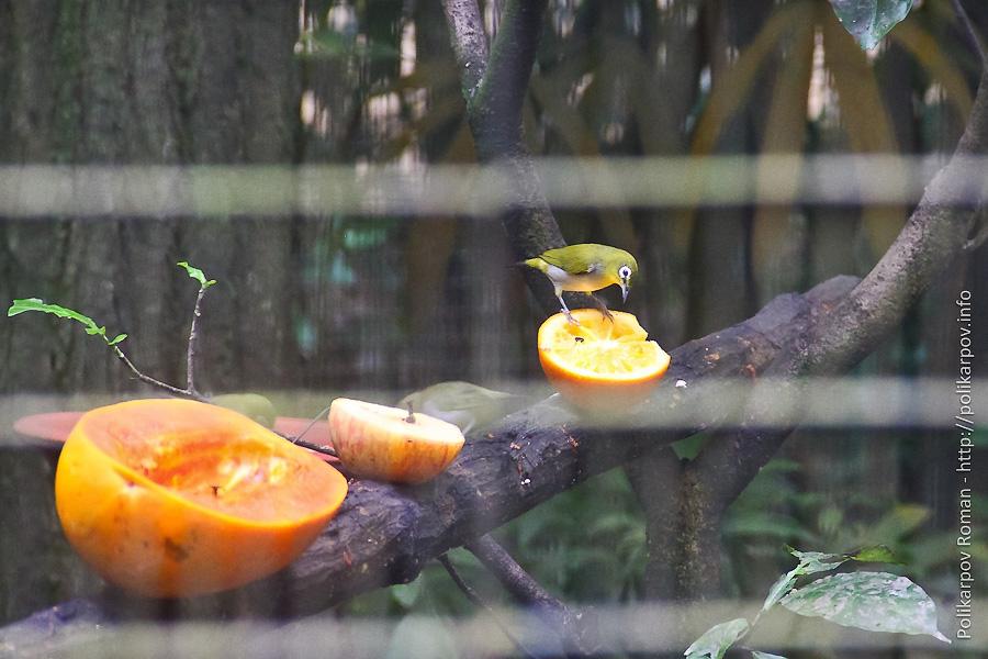 0 c4fa6 d5998bbc orig Парк птиц Jurong в Сингапуре