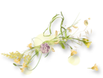 meadowbut_cluster5 (3).png