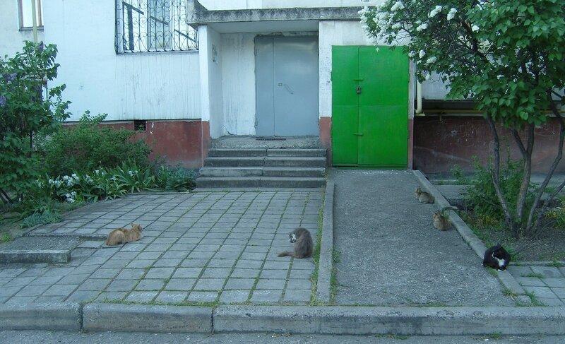 5 кошек у подъезда