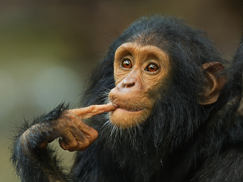 обезьянка задумалась