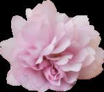 bee_floral_el11.png