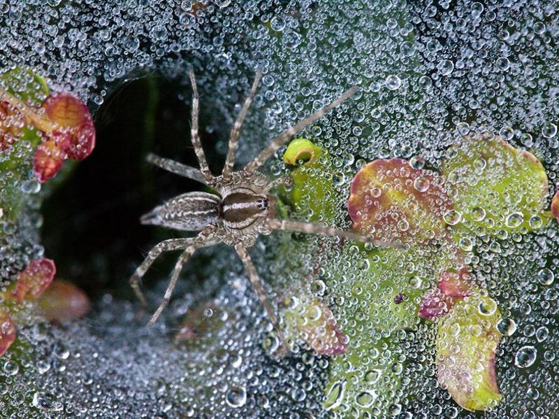 Лучшие фотографии за август National Geographic
