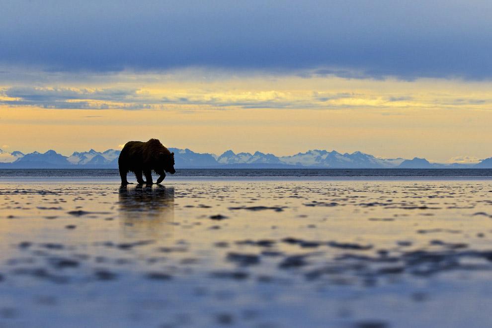 23. Обучение танцам, Аляска. (Фото Karie Lefebvre | National Geographic Photo Contest):