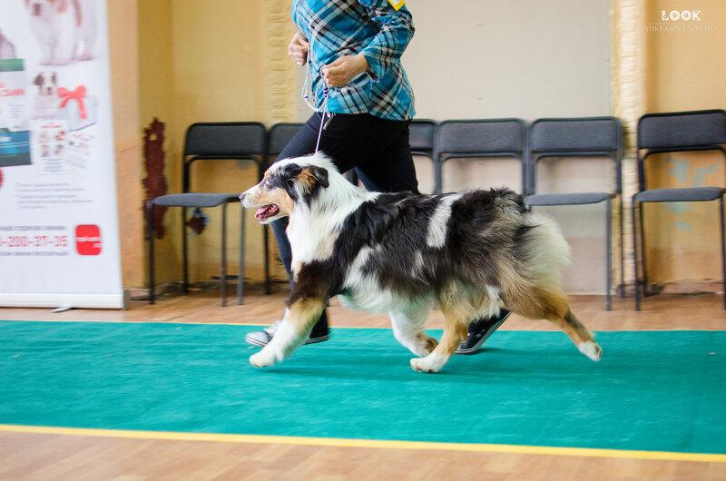 Выставочные успехи наших собак - 5 - Страница 27 0_a881a_e09d18e5_XL