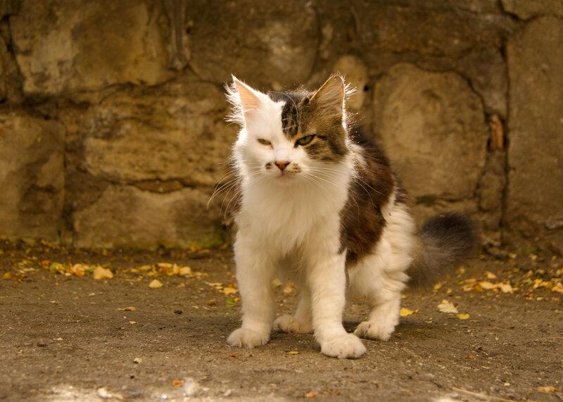 Кошки Севастополя