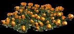 цветы (107).png