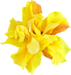 ldw_UnderPalmTree_flower-yellow2.png