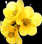 Lemony-freshness_elmt (47).png