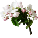flower (11).png