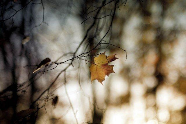 Фотографии с разбега от Flickr для Pixeler 0 10842d 68d2ff98 XL