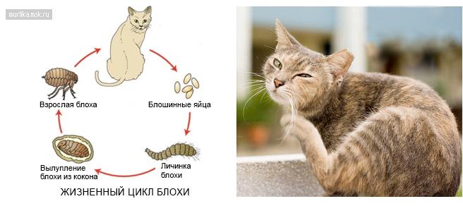 Как сделать ошейник для кота своими руками - Woman s Day 54