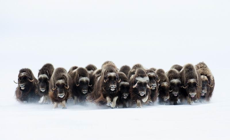 """Восьмой фестиваль фотографий дикой природы """"Золотая черепаха"""". Лучшие фото года"""