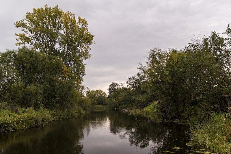 Чёрная вода реки Просницы в районе Перекопа. Ивовые кусты, листья кувшинок и болотная растительность, как на картине Васнецова «Сестрица Алёнушка»