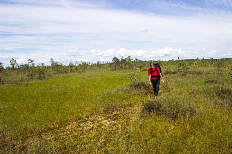 тропа на озеро Вялье в мшинском болоте