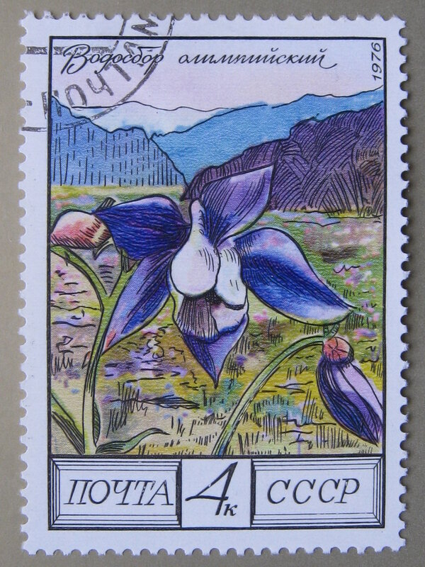 Водосбор олимпийский (Aquilegia olympica).
