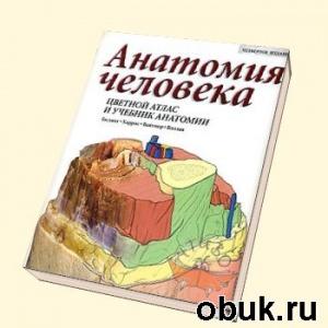 Книга Цветной атлас анатомии человеческого тела